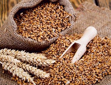 pasta fresca con farine integrali ai cereali
